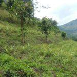 KVK farm view