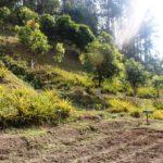 Horticulture plot (Farm)